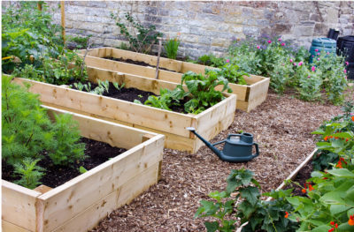 Build a Raised Garden Bed with Treated Wood
